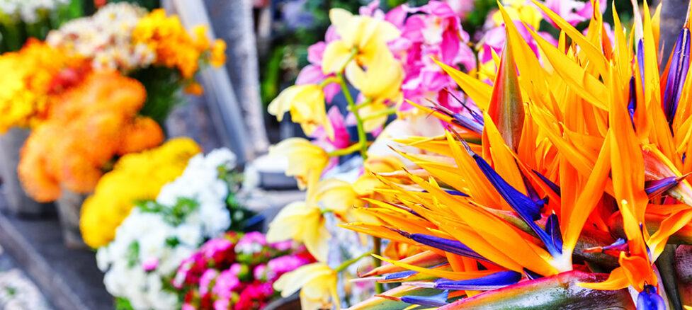 Festival dei fiori a Madeira