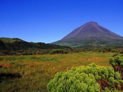 Landscape, Pico island (4)