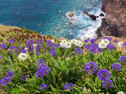 Wild flowers on the Madeiran seaside